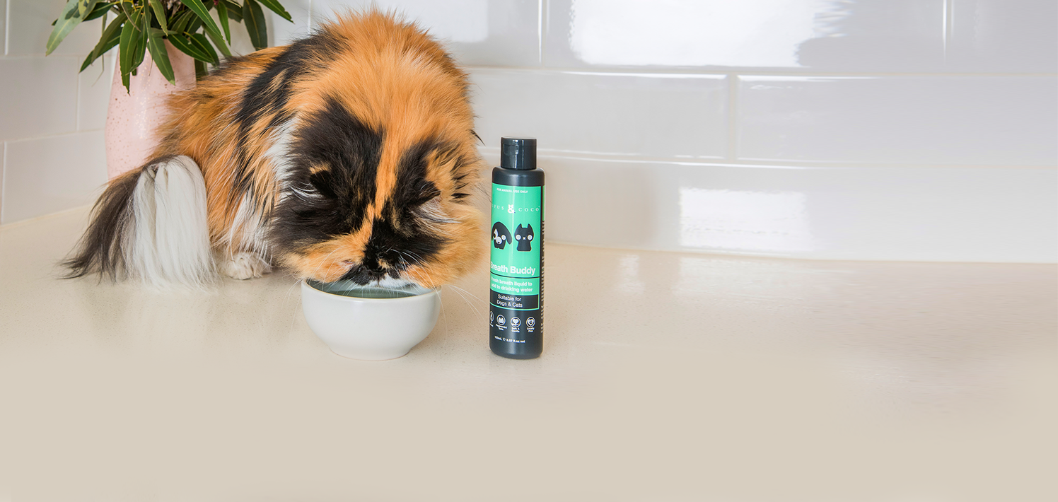 Fresh breath drink for dogs and cats- dog with drinking bowl