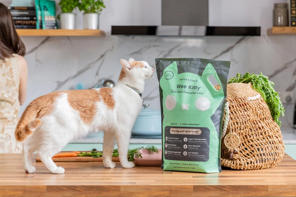Clumping tofu cat litter with Lumox & Noxie the two catexplorer