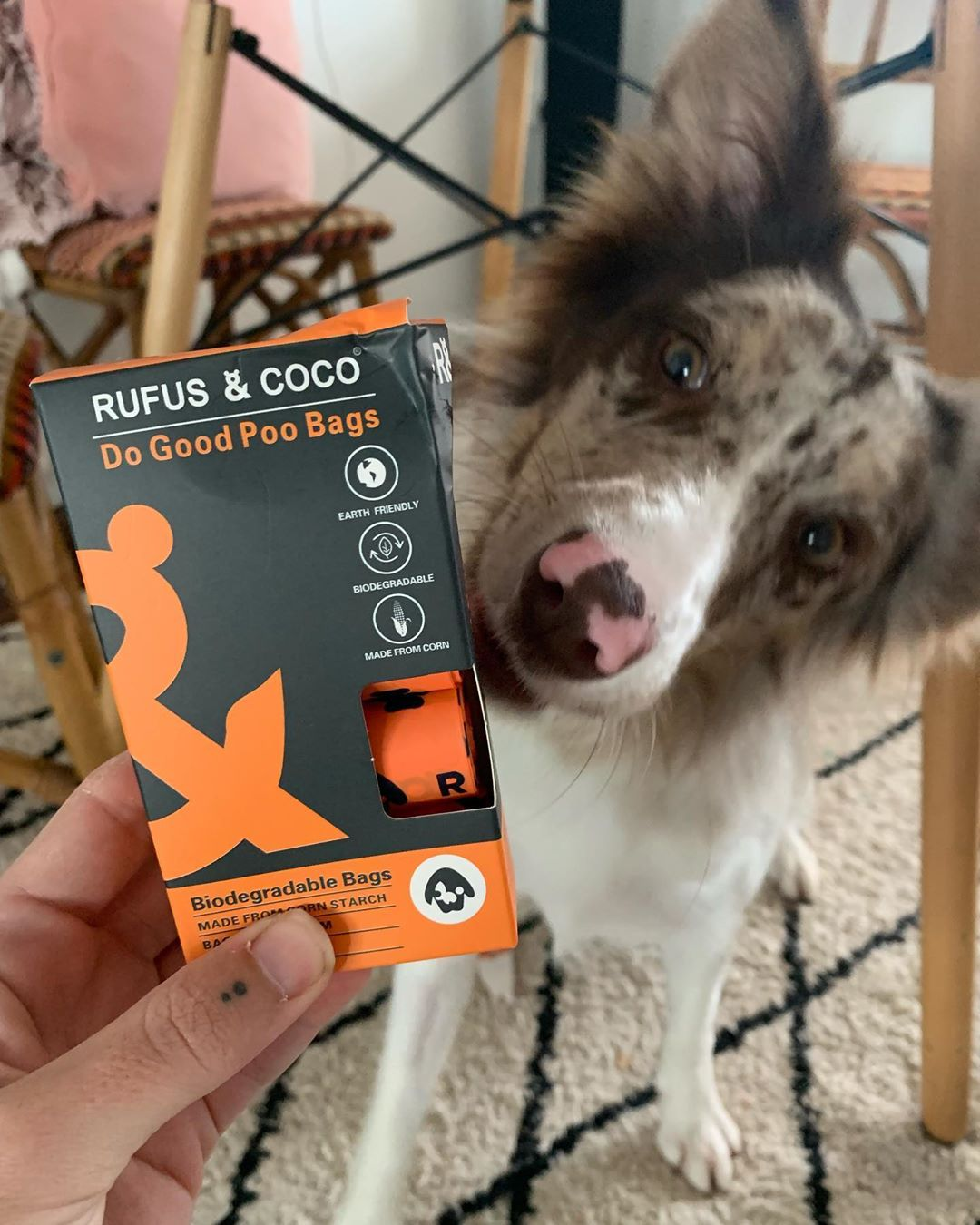 gigiminibordercollie with Do Good Dog Poo Bags by Rufus and Coco