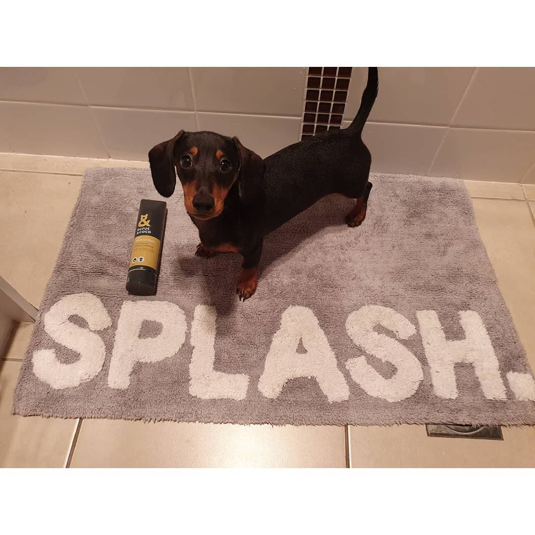 @harley_the_minisausage with 2in1 Oatmeal Wash by Rufus & Coco