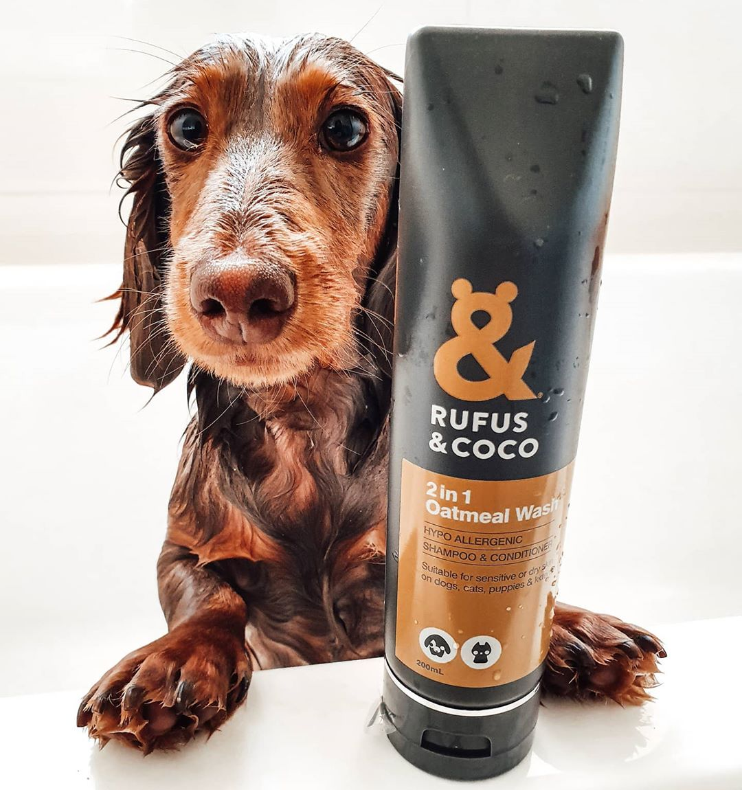 @theminihugo with 2in1 Oatmeal Wash by Rufus & Coco