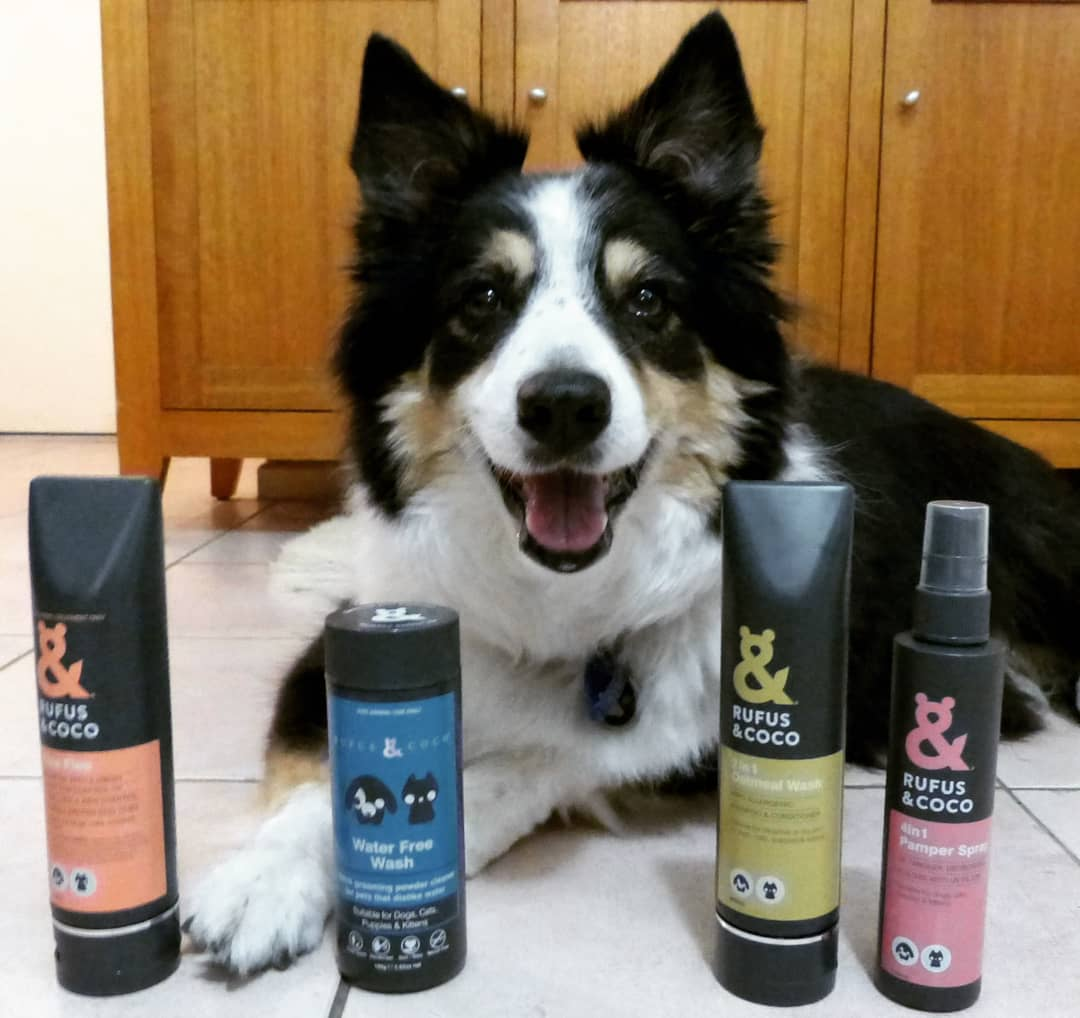 @trixie_border_collie with 2in1 Oatmeal Wash by Rufus & Coco