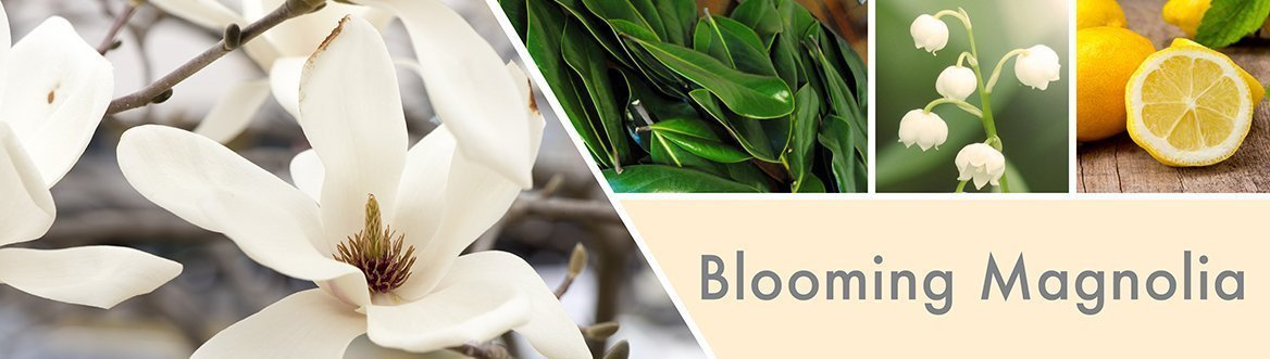 Blooming Magnolia Fragrance