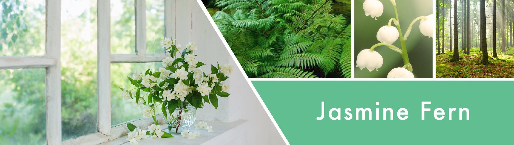 Jasmine Fern Fragrance