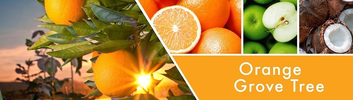 Orange Grove Tree Fragrance