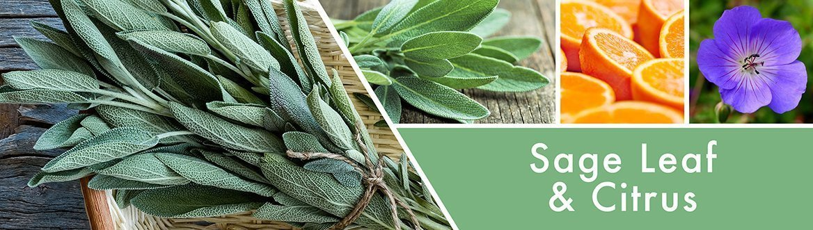 Sage Leaf & Citrus Fragrance