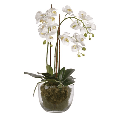 Medium Faux White Phalaennopis Orchid - Barnbury
