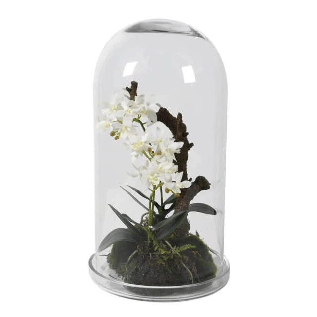 Faux White Orchid under Glass Cloche - Barnbury