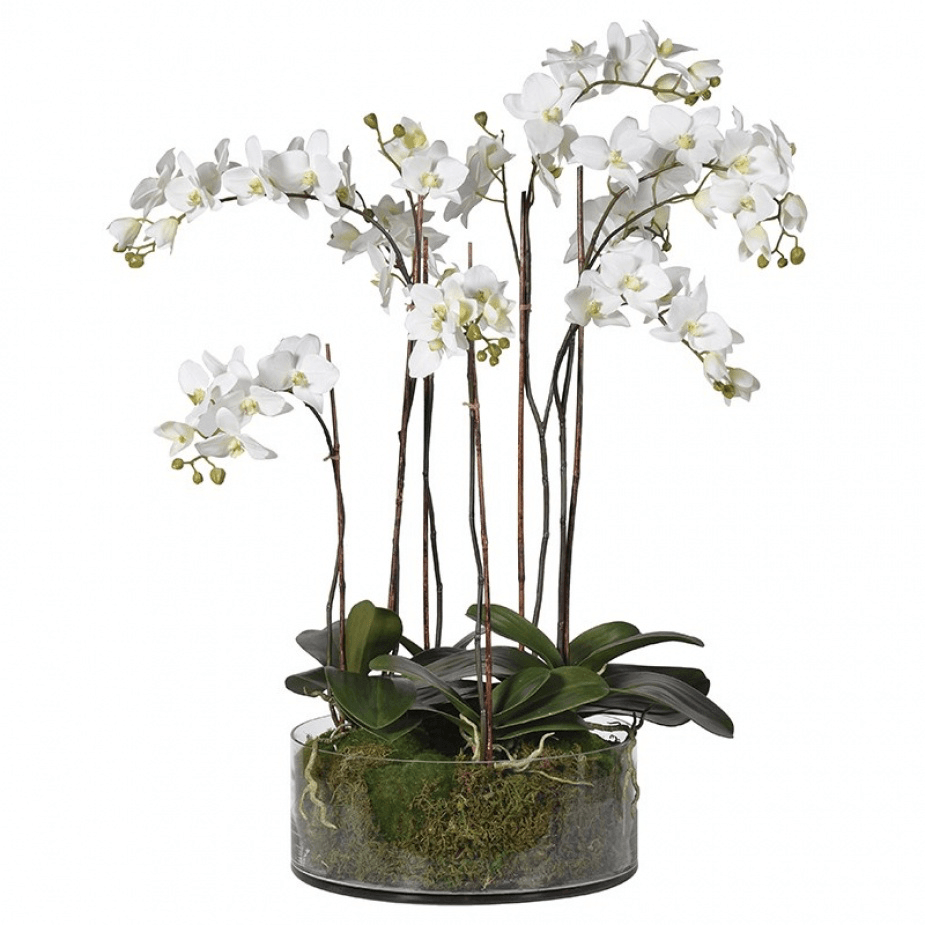 Faux Phalaenopsis Orchids in Glass Bowl - Barnbury