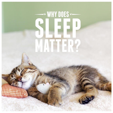 Why does sleep matter? (and can CBD help?) | b. products