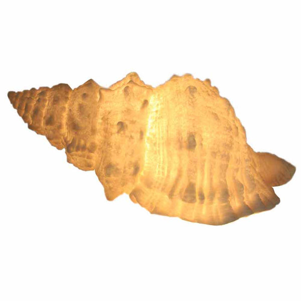 Pasaloria Shell Lamp