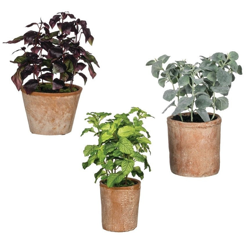 Herbs in Terracotta Pot