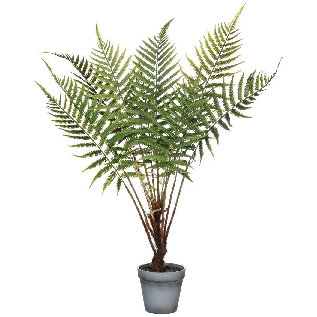 Fern Potted Plant