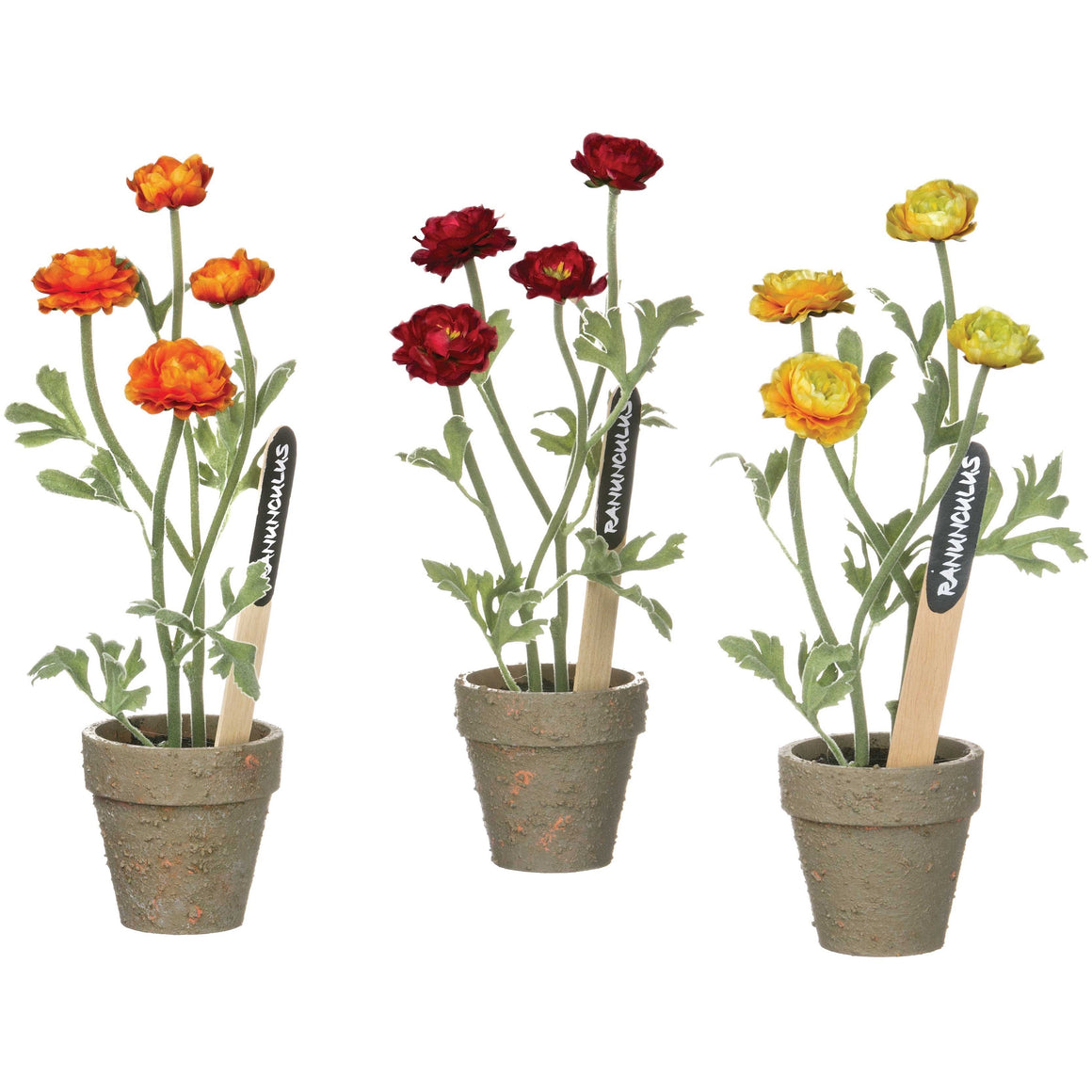 Ranunculus Potted Plant