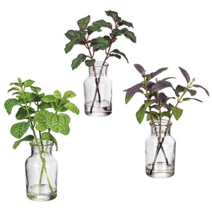 Herbs Potted Plants