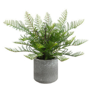 Fern in Cement Pot