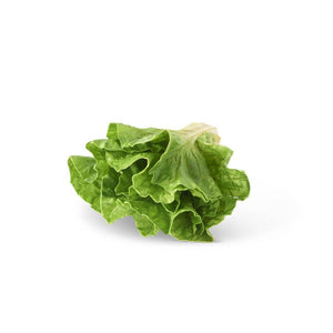 "7"" Real Touch Lettuce Head"