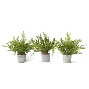 "Assorted Ferns"" In Metal Pot (3 Styles)"