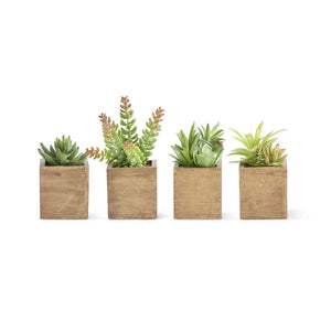 Succulents in Square Wood Pot