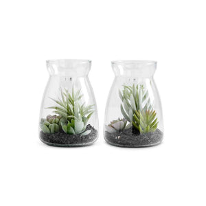 "Assorted 6"" Succulents in Glass Jars (2 Styles)"
