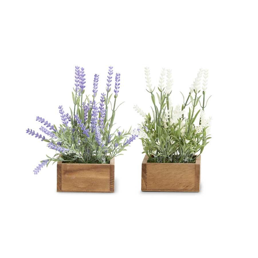 Lavender Plant in Square Wooden Pot (2 Styles)
