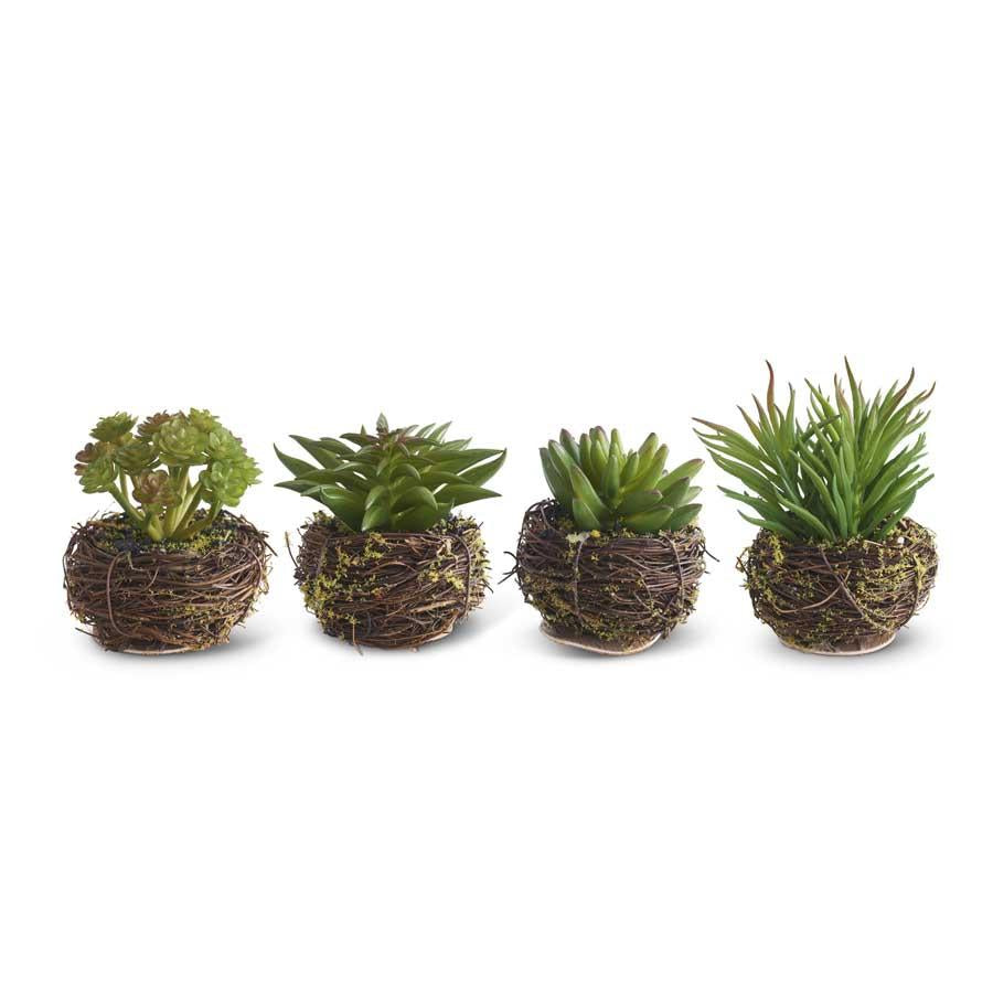 Assorted Small Succulents in Twig Pot (4 Styles)