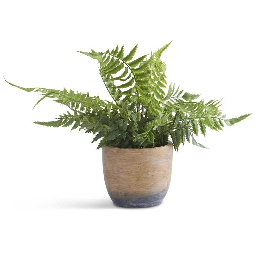 Fern in Weathered Cement Pot - 12""