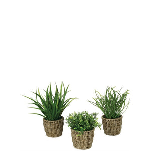 Foliage w/Basket Potted Plant