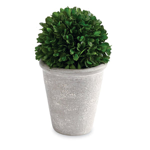 Short Ball Preserved Boxwood Topiary