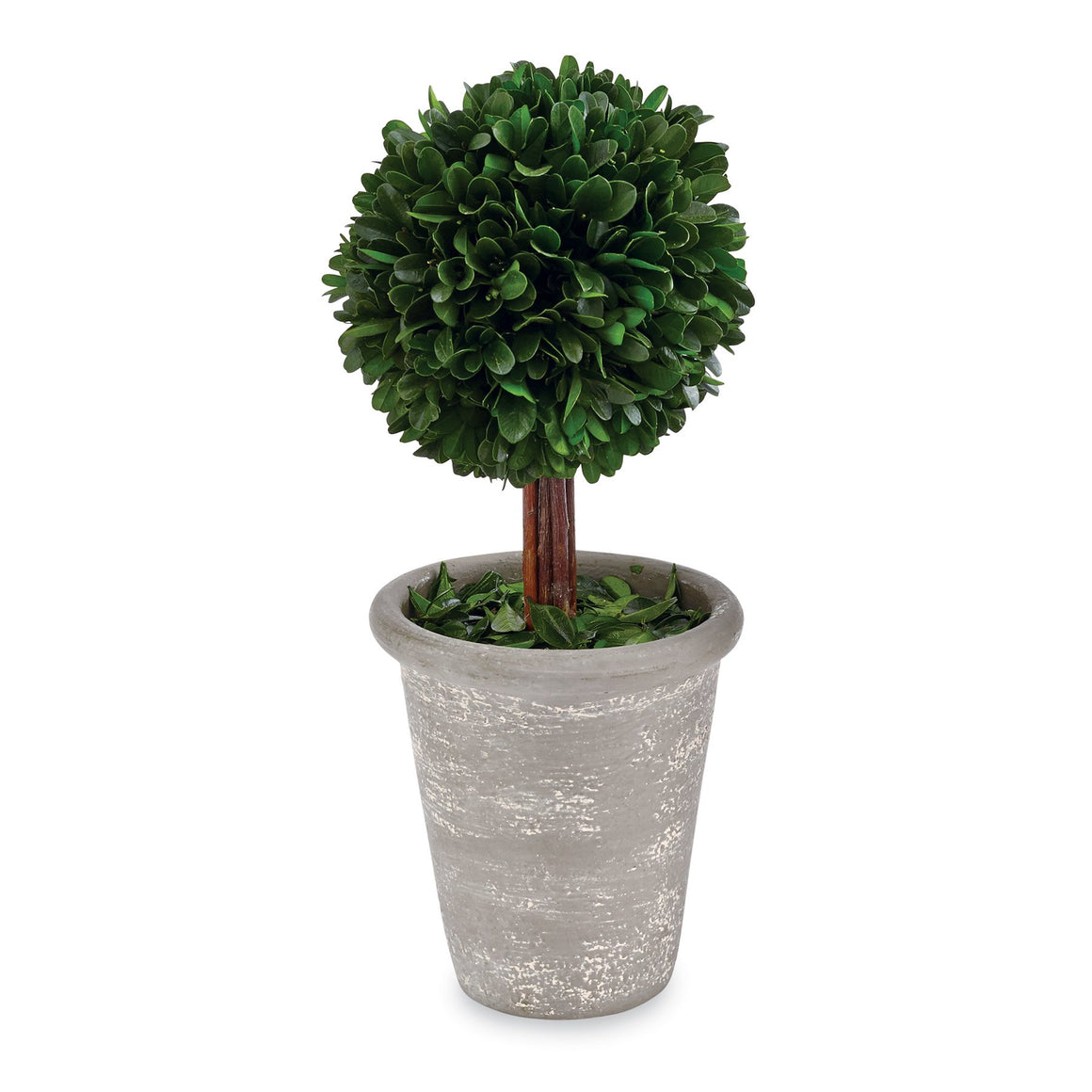 Ball Preserved Boxwood Topiary