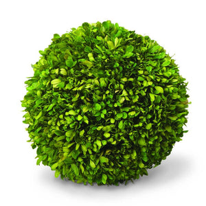 Giant Preserved  Boxwood Ball