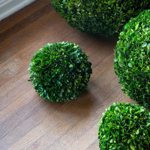 "10"" Preserved Boxwood Ball"