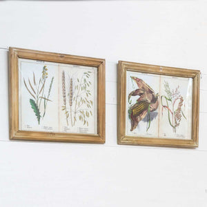 Framed Grains And Grasses Page Prints
