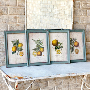 Framed Citrus and Blossom Prints