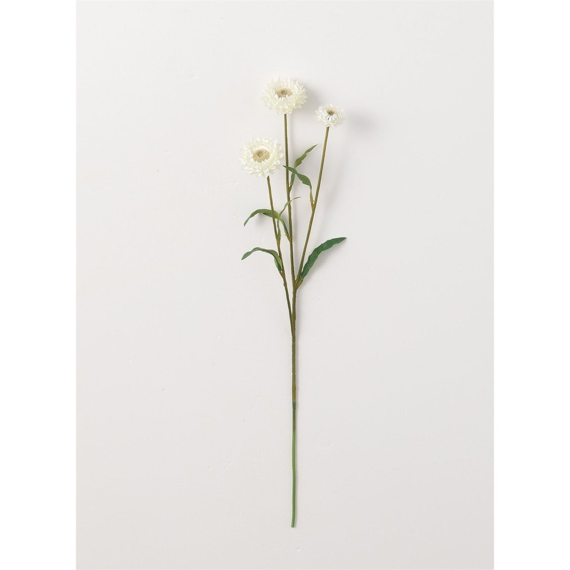 Straw Flower Stem