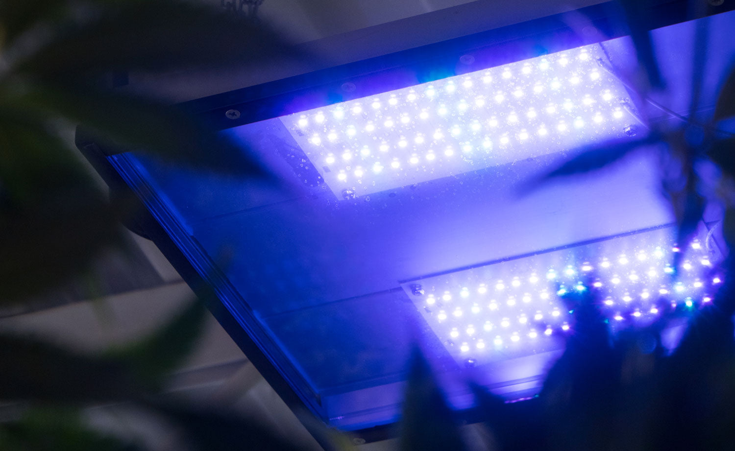 Efficient LED grow light