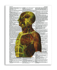 "Psychedelic Anatomy 1 8.5""x11"" Semi Translucent Dictionary Art Print"