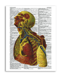 "Psychedelic Anatomy 3 8.5""x11"" Semi Translucent Dictionary Art Print"