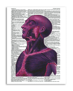 "Psychedelic Anatomy 4 8.5""x11"" Semi Translucent Dictionary Art Print"