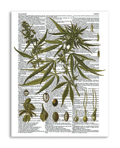 "Vintage Marijuana Plant 8.5""x11"" Semi Translucent Dictionary Art Print"