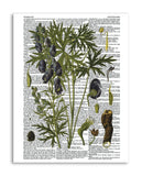 "Vintage Botany 4 8.5""x11"" Semi Translucent Dictionary Art Print"
