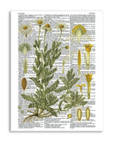 "Vintage Botany 6 8.5""x11"" Semi Translucent Dictionary Art Print"