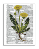 "Vintage Botany 9 8.5""x11"" Semi Translucent Dictionary Art Print"