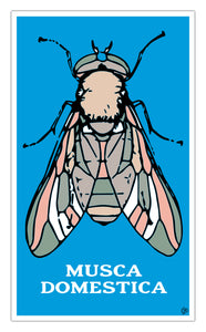 "Musca Domestica 13""x22"" Vintage Style Showprint Poster - Home Nostalgia Decor Wall Art Print - Kristy Joyce Artist Edition"