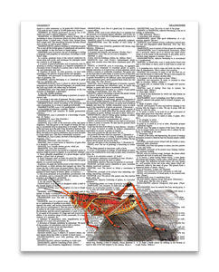 "Red Grasshopper 8.5""x11"" Dictionary Art Print"