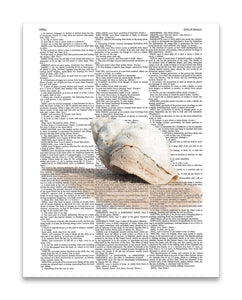 "Shell 8.5""x11"" Semi Translucent Dictionary Art Print"