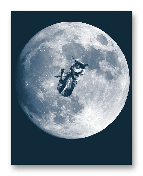 Laika Floating Over the Moon 11