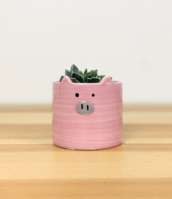Mini Pot and Succulent - Piggy