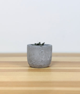 Concrete Egg Mini Succulent