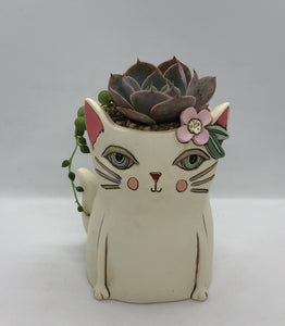 'Pretty Kitty' with Succulents